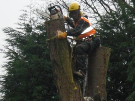 Mark Hodson Tree Services in Aldridge Walsall west midlands