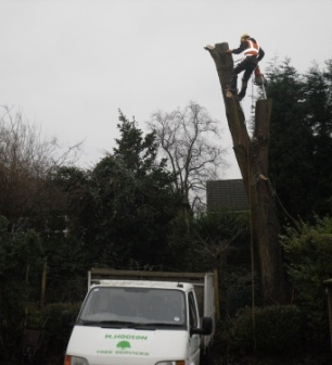 Mark Hodson Tree Surgeon Services in Aldridge Walsall west midlands